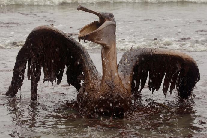 atrapado lluvia de petróleo  elmundoenfotos wordpress com