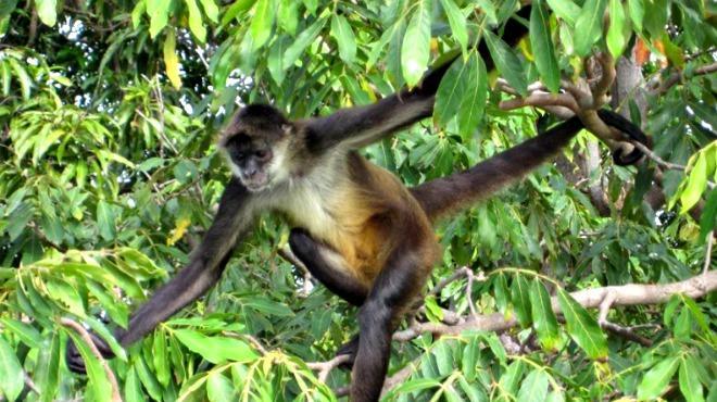 Los pocos que no sufrieron quebranto, como recuerdo de la simpleza de sus corazones se transformaron en monos