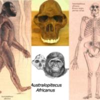 LA EVOLUCIÓN HUMANA   Y EL PROCESO DE HOMINIZACIÓN