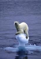 oso_polar1
