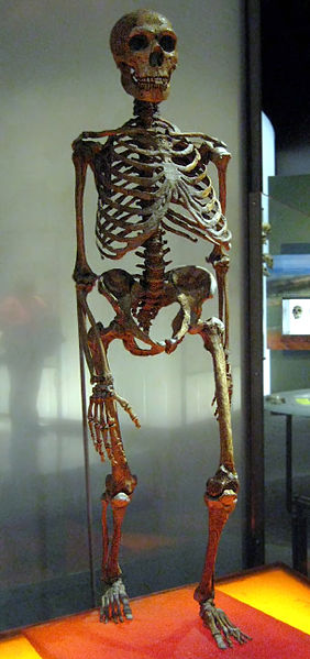 Neanderthalensis Claire Houck