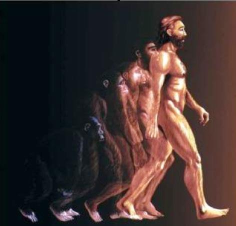 ¿POR QUÉ EL HOMO SAPIENS SAPIENS EVOLUCIONÓ TAN RÁPIDO? CRONOLOGÍA (1/6)