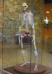 Homo erectus de Tautavel Francia foto Gerbil