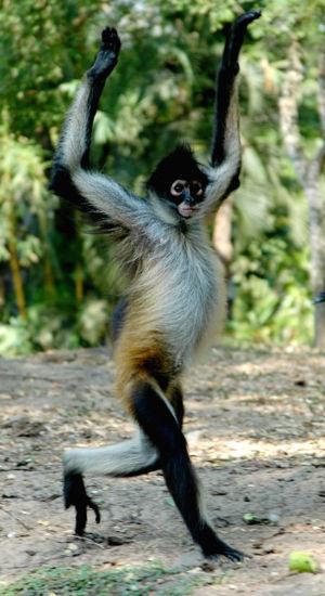 Mono arana Ana_Cotta