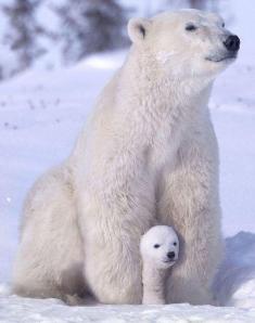Osa polar con cachorro Amigos Mundiales