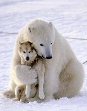 Oso polar abrazando perro internet
