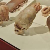 Cráneo de Paracas, Perú, Resultados Asombrosos en el Análisis del ADN