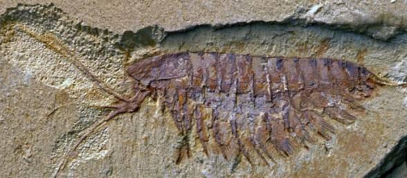 encuentran-yacimiento-de-fosiles-588x257