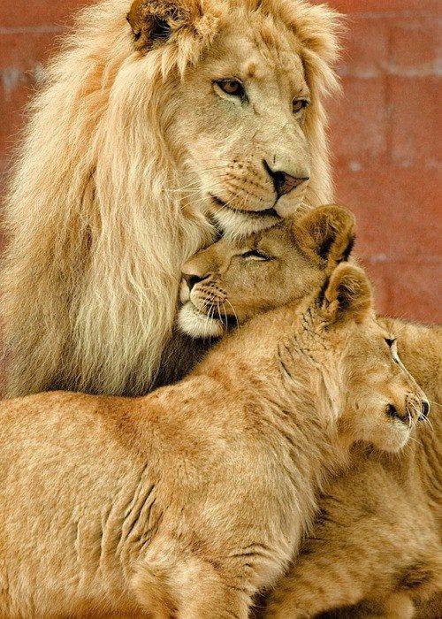 León con sus leonas Amigos Mundiales