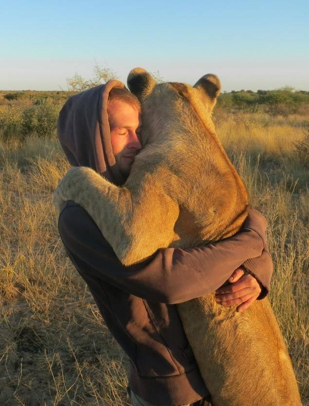 Tierno abrazo leona Nice √ © Animals in Africa
