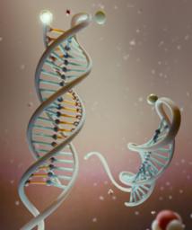 ADN Imagen Marco Tripodi