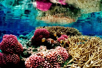 Gran Barrera de Coral Rafa