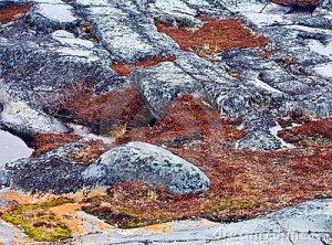 Permafrost tundra-soil-