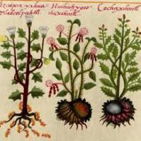 El INAH preserva 75 plantas medicinales en peligro de extinción