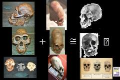 craneos largos hibridos de et y neandertales