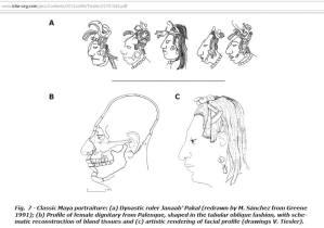 craneos mayas largos o alargados