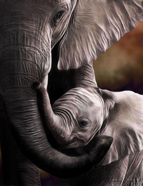 Elefanta con su hijito Amigos Mundiales