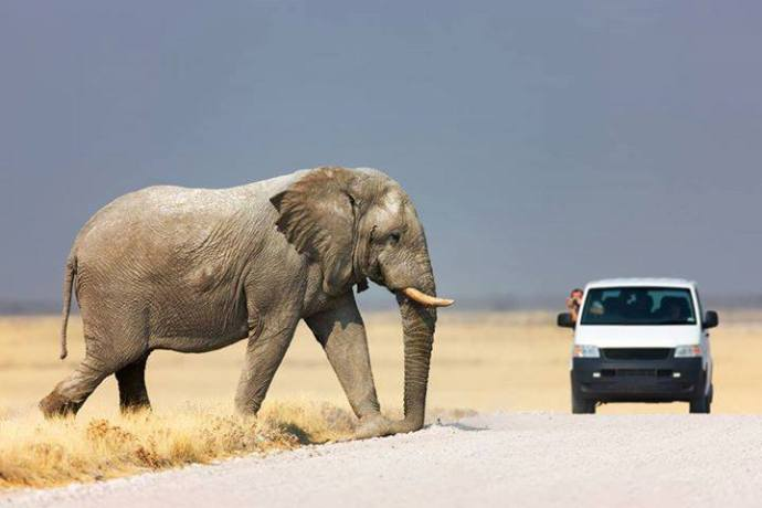 Elefante Animals in Africa ©