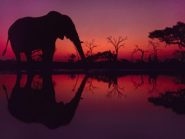 Elefante ocaso a caontraluz