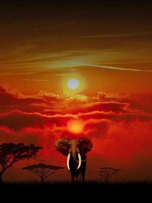 elefante y Sol