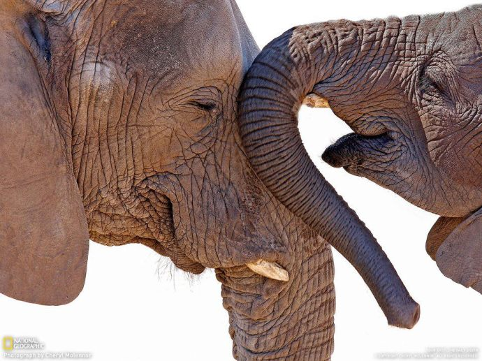 Elefantes amorosos