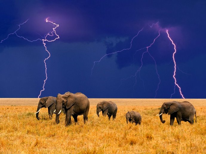 Elefantes tormenta