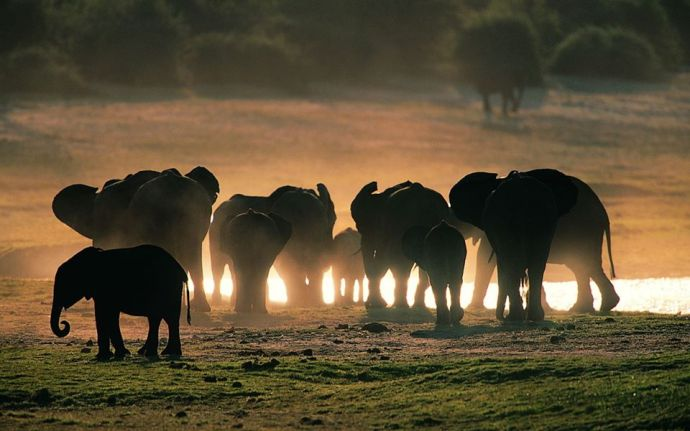 Elefantes y elefantito