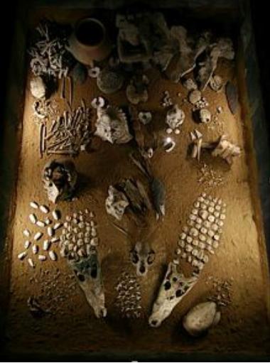 ofrendas-funerarias-de-flora-y-fauna-templo-mayor-tenochtitlan-mexico