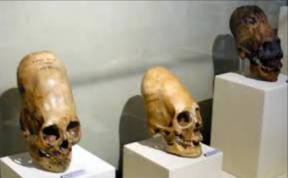 Tres craneos largos de Paracas Peru