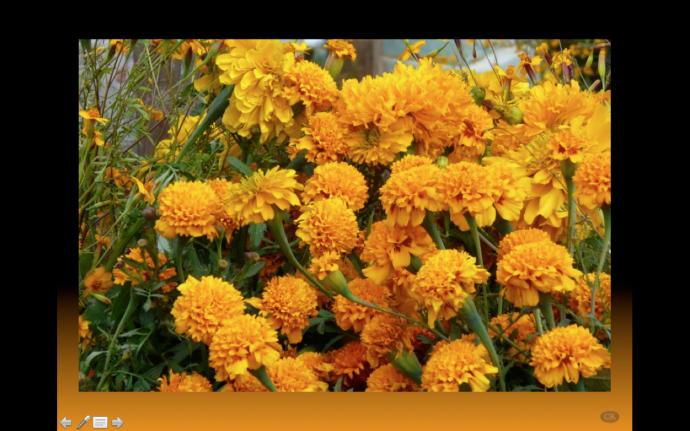 2 de noviembre dia de muertos flor de zempalxuchitl