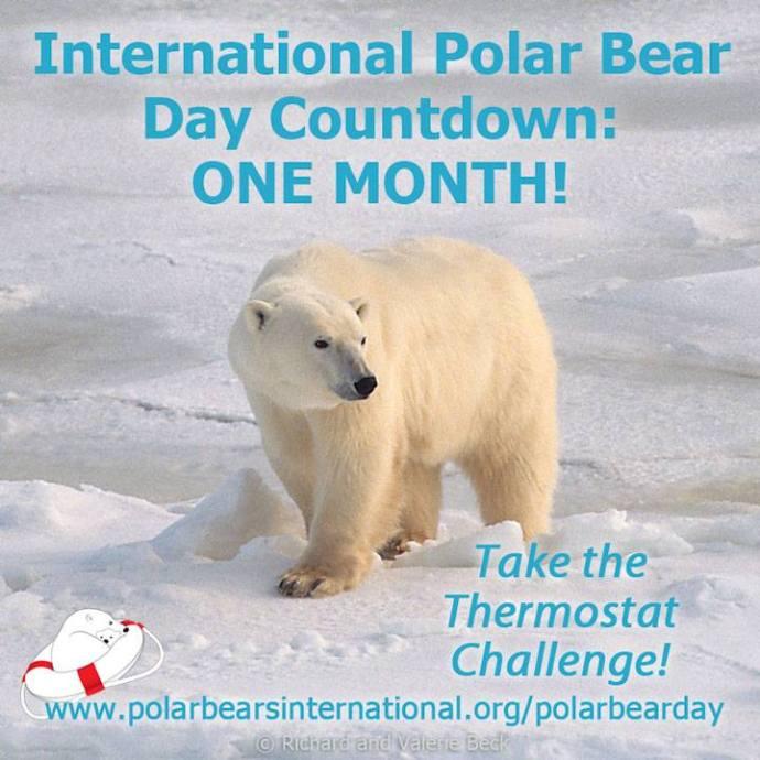 Dia Internacional del Oso Polar 27 de febrero