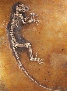ida-fosil-de-47-millones-de-años-presentado-en-museo-de-historia-natural-de-nueva-york-france-presse