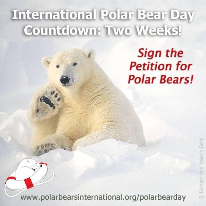 27 de febrero dia i nternacional del oso polar