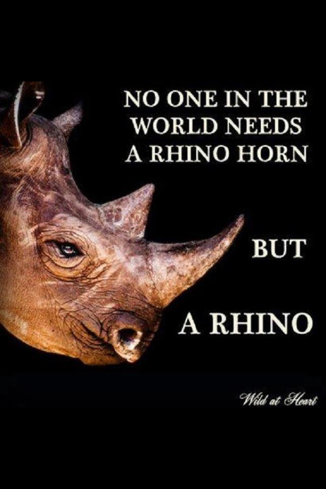 El cuerno del rinoceronte solo le sirve al rinoceronte