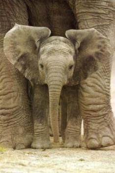 Elefantito con su mama Amigos Mundiales