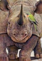 Rinocerontes en peligro de extincion