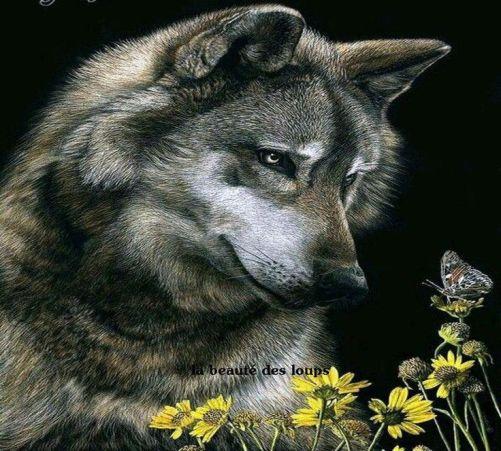 lobo viendo una mariposa