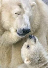 mama osa polar y su cachorro Amigos Mundiales