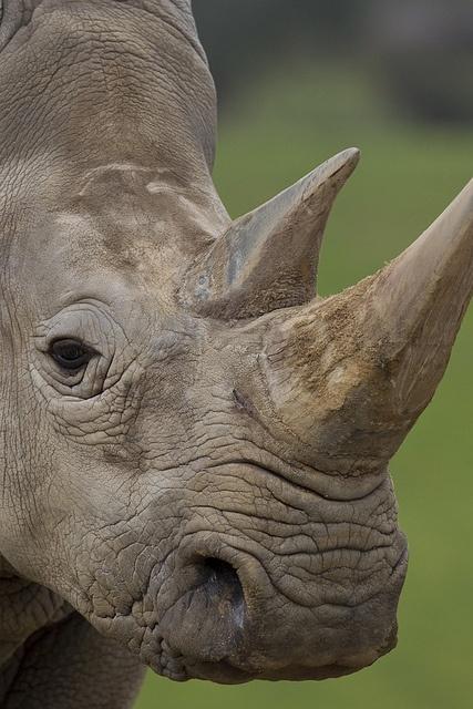 rinoceronte zoo de San Diego