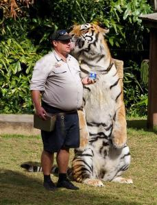 Tigre gigante cariñoso