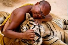 tigre revision de dientes