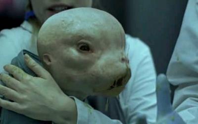 embriones_animales_humanos