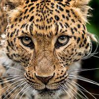 LISTA ROJA DE ESPECIES ANIMALES EN PELIGRO DE EXTINCIÓN (FRAGMENTO)