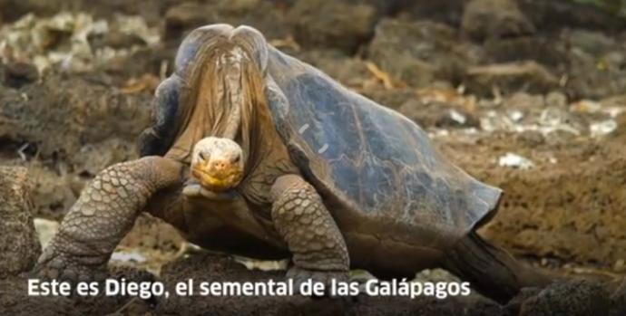 tortuga-de-galapagos-salvo-a-su-especie