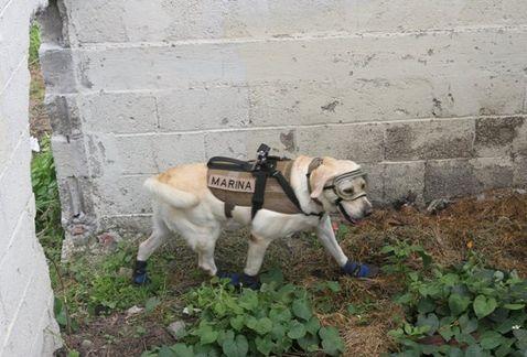 ¿A quién salvó Frida, la heroína de los perros rescatistas?