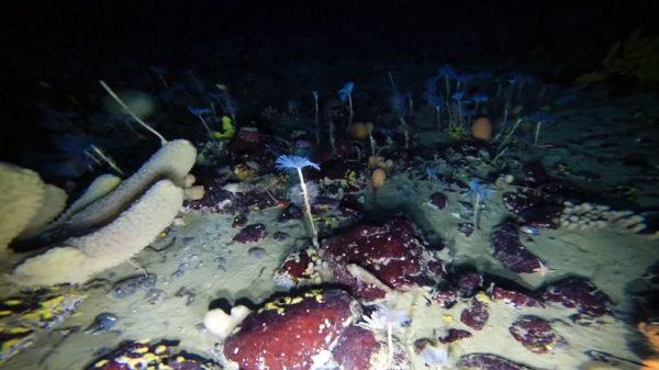 Los residuos en la Antártida revelan la contaminación global, dice Greenpeace